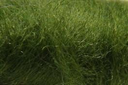 Australijos Merino sluoksna 20,5 µm, samanų spalvos, kodas AMS105, 100 g
