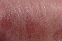 Australijos Merino sluoksna 20,5 µm, šviesiai rožinė, kodas AMS167, 100 g